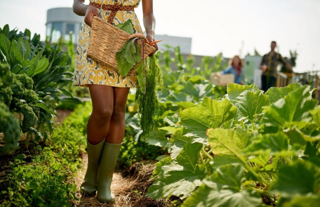 black woman farming